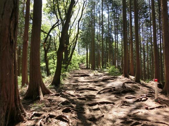 063 580x435 - ちぃと仲間達のドタバタ山行き道中記【2歩目】